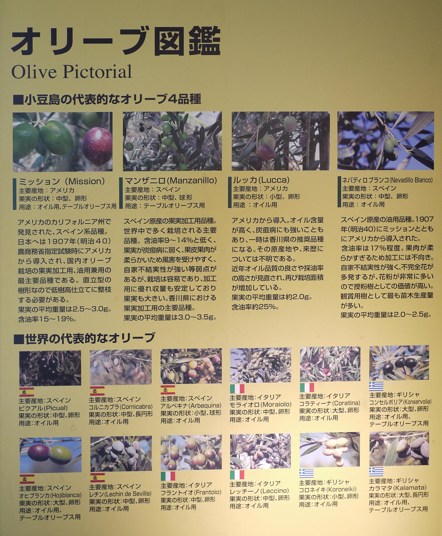 小豆島オリーブ公園 オリーブの育て方2