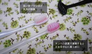 歯ブラシには菌がたくさん