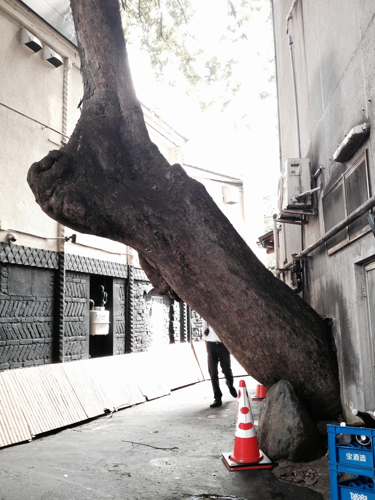 木の力1 京都川原町